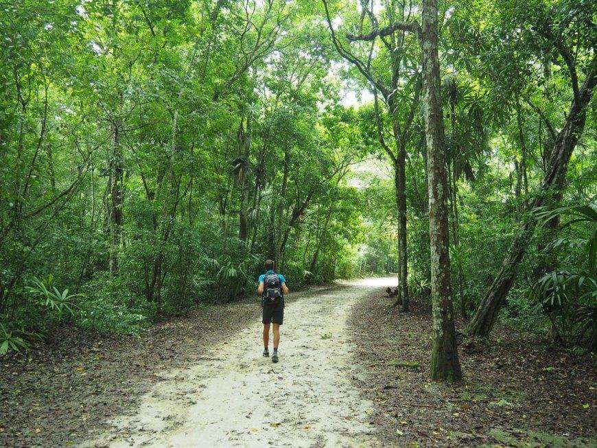 paseo por la jungla de tikal