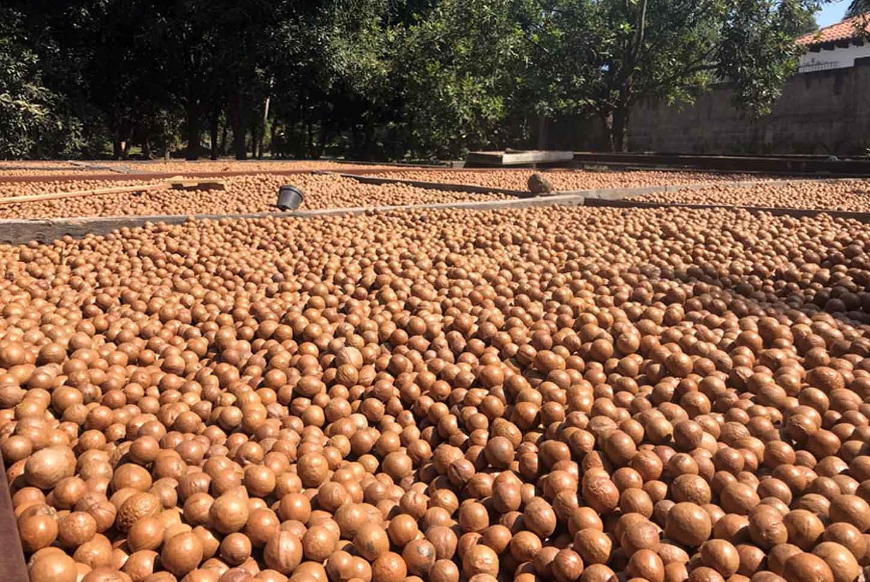 exterior de Valhalla Macadamia Nut Farm