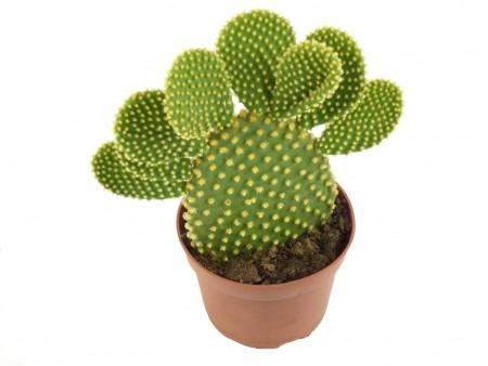 Foto de: Cactus y suculentas